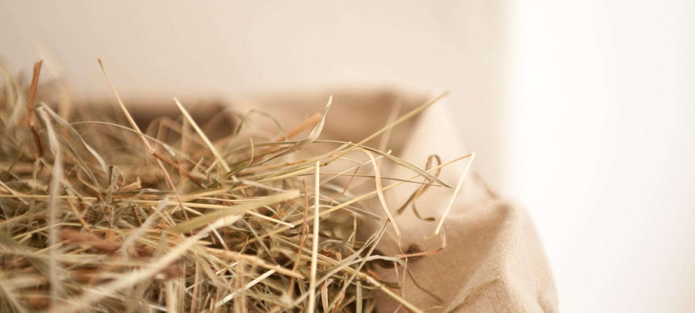 Detail on hay with blurred background